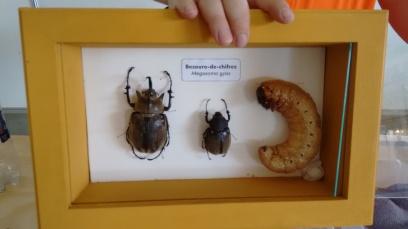 Mostra de insetos do CBE 2016
