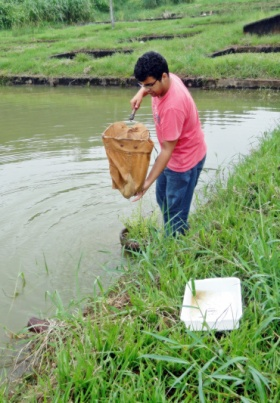 Wilson coletando insetos aquáticos.
