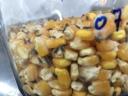 Caruncho do milho.