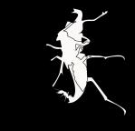 Programa de Pós-Graduação em Entomologia - UFV